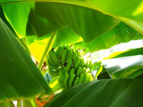 熱川バナナワニ園の中心で、バナナ愛をさけぶ(笑) -家族で毎年恒例の伊豆旅行へ♪