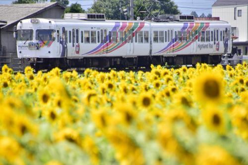 松本大学近くのひまわり畑を見に松本電鉄上高地線に訪れてみた