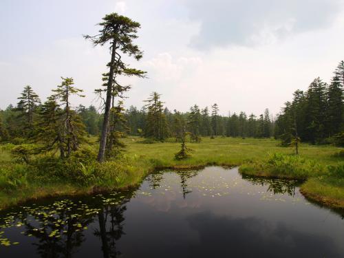 北海道ガーデンショーに行こう♪-2015夏- ちょっと寄り道 浮島湿原