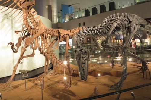 北陸ぐるっと回って来ました、キトキト寿司から永平寺まで盛り沢山~恐竜博物館