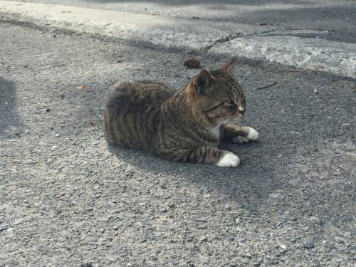 猫の島(田代島)・網地島訪問記