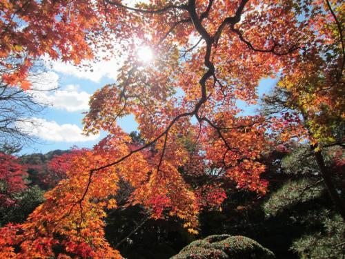 紅葉の鬼怒川温泉&日光への家族旅行