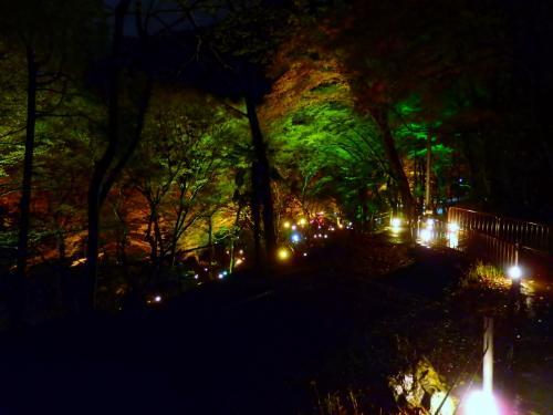秋の夜長に激しい雨が降り続くなかでひっそりと八瀬で紅葉のライトアップ