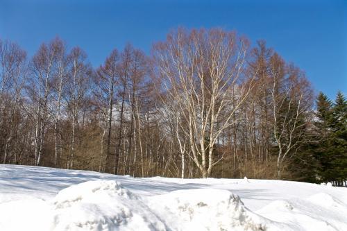 雪の八ヶ岳高原のんびり旅