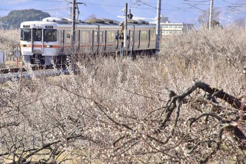 春を探しに、小田原・曽我梅林に咲く梅の花と流鏑馬を見に訪れてみた