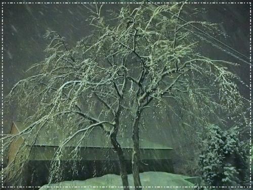 思いっきり雪景色を見た~い!!と諦めきれずに・・・角館へ ★夜の雪桜★