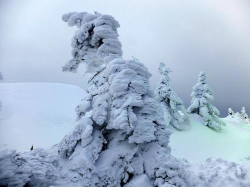 「 ロープウエイで樹氷原 と 朝一番の雪上車で蔵王の樹氷原へ 」 2016