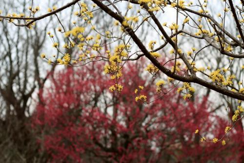 久しぶりに自転車でのんびり智光山公園へ(前編)都市緑化植物園:曇天に霞む空模様の下で鮮やかに存在を主張する春の花