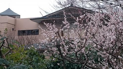 曇天で春の花をきれいに撮るのは難しい