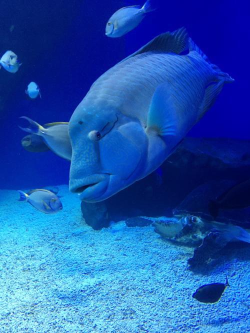 イルカに、魚たちに、そしてゆらゆらクラゲに癒されてinエプソンアクアパーク品川