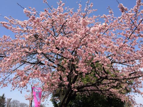 2016年3月 第26回熊谷さくらマラソン大会