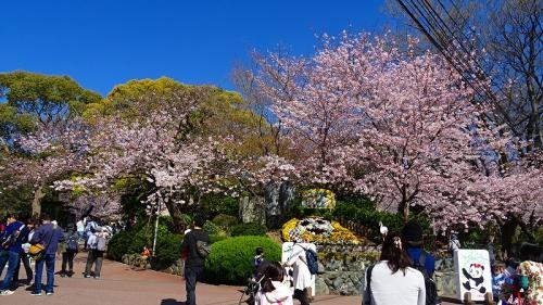 桜満開の王子動物園 上巻