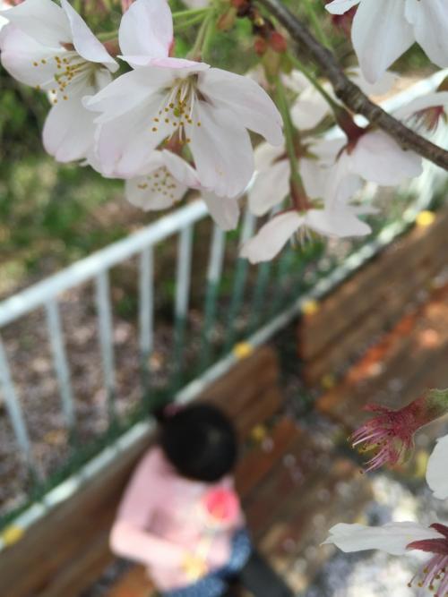 【2016・4】桜の桐生が岡公園・レトロな遊具とゆる~い動物達~動物園編