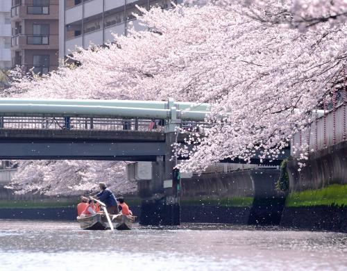 東京の今シーズンのお花見、イマイチ天気に恵まれませんでした。<br />せっかく「櫓で漕ぐ和船に揺られてお花見」としゃれこんだのですが?・・・・・・<br /><br />曇天!曇り空!・・・・・・<br />リベンジです!・・・・・・<br /><br />今日は久しぶりの『『晴天』』<br />(*^▽^*)<br />満開時のしっぽ?かな?<br />心地 よい 春風 に 時折 ***花吹雪***<br />