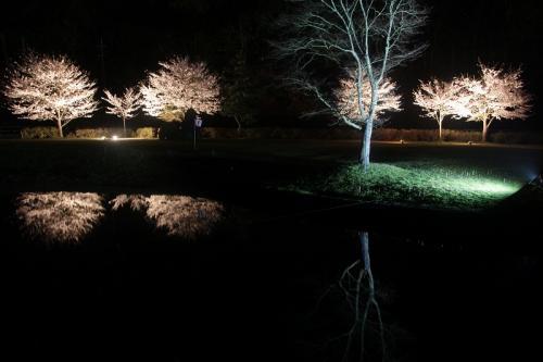 二王公園ライトアップ SAKURA