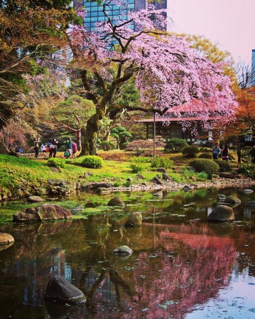 摩訶不思議・下町さんぽ -桜の花咲く頃に-