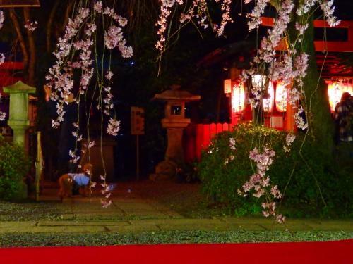 堀川通の静かな寺社で今年の桜を目いっぱい堪能!