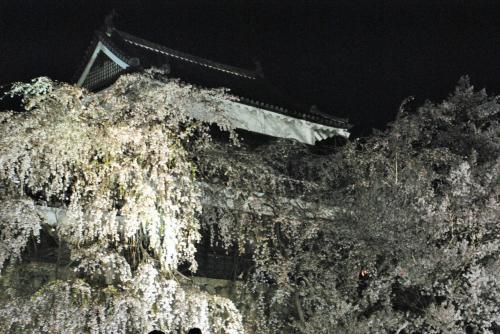 86歳の父と82歳の母を連れて上田城千本さくら祭り~夜桜~海野宿に行ってきました。母は昨年秋の大たい骨の骨折後、初旅行です。その②旧北国街道の柳町~上田城の夜桜を楽しみました。