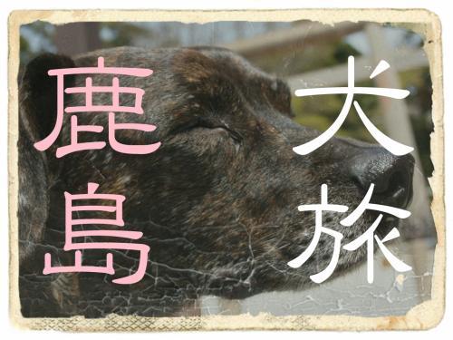 犬旅 ~鹿島~