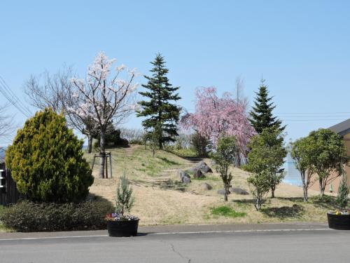 シベール付近の桜鑑賞