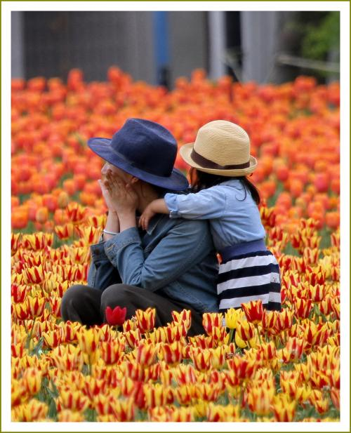 Solitary Journey [1754] 感動の花風景がありました!75万本のチューリップが満開♪<世羅高原農場〜虹の畑・初恋の丘>広島県世羅町