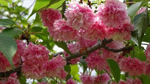 尼崎市農業公園・・・公園の風景と花。
