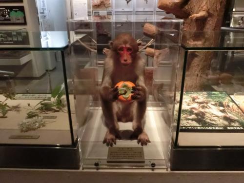千葉県立中央博物館 (生物展示室)