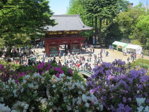 根津神社へ行きました。つつじまつりでした、近くに東京大学があったので見学してきました。