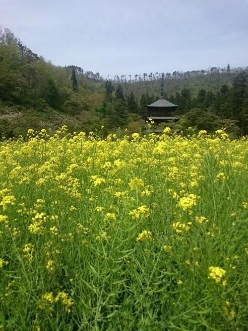 安久津八幡神社、神々しい空間でした