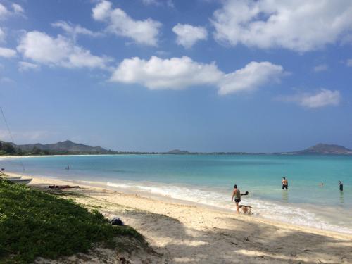 新しい仕事に転職する前の有給消化中にハワイへ。留学経験がなかったのでどうしても一度留学をしてみたかった。場所はカナダ、オーストラリア、アメリカ本土と迷ったが、ハワイには行ったことがなく、行った人が皆良いところだったというので気になっていたのでバケーションも含めてハワイを選んだ。訪れたのは2月だったが、十分夏だった。温暖な気候、穏やかな雰囲気、綺麗な海、食事は美味しく、自然もあったリゾートって感じだった。私もハワイ好きの一人になってしまった。