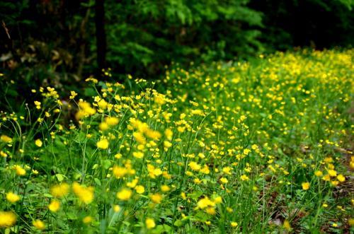 ◆福島・四季・彩々・Part,57・初夏の風
