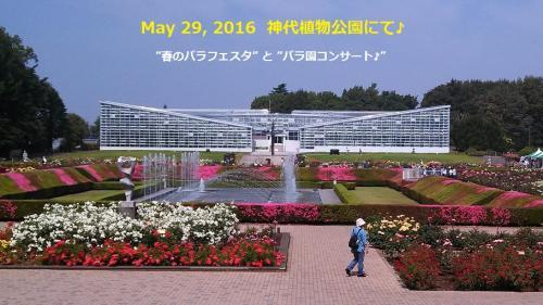 ♪ 神代植物公園『春のバラフェスタ』とばら園コンサート ♪