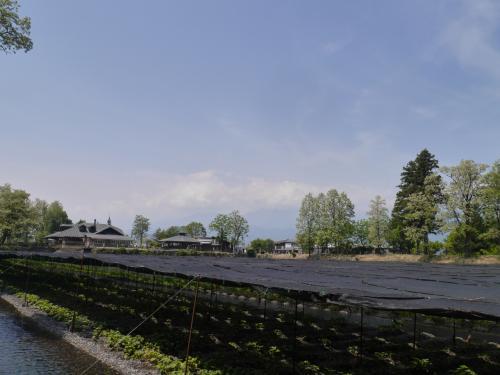 緑まぶしい新緑とのどかな田園風景を見たくて・・・信州 安曇野サイクリングと松本散歩の旅♪♪