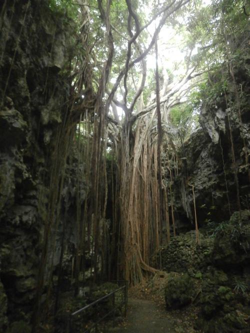 ムロたんのバースディ旅行\(^o^)/ in 沖縄 その4 (最終巻)  亜熱帯の自然の恵みを受けてガンガラーの谷散策 & JAL国内線ファーストクラスに乗って帰路へ