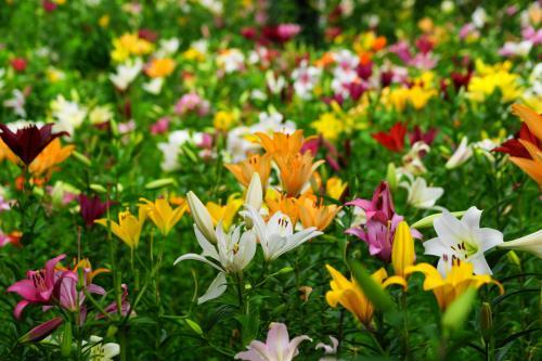 加茂荘花鳥園から可睡ゆりの園へ