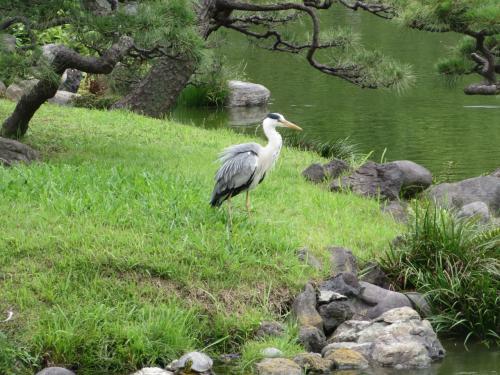 1人でお散歩 清澄庭園と周辺。清州橋。臨川寺
