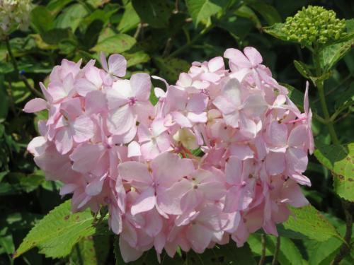 梅雨の晴れ間に紫陽花とお寺を見にいくぞ~!☆蜻蛉池公園・七宝龍寺☆フルーツをいっぱい食べて免疫アップヽ(^o^)丿