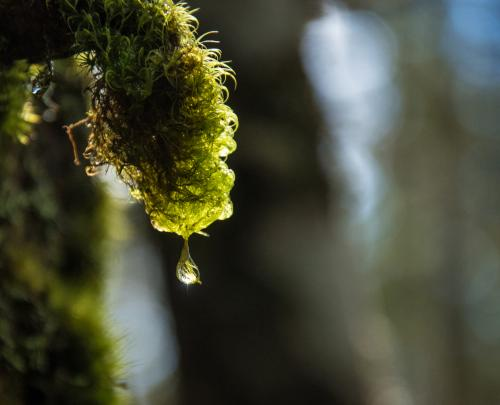 久しぶりの山歩きは初の北八ヶ岳 ~苔の森と白駒池の撮影のついでに~