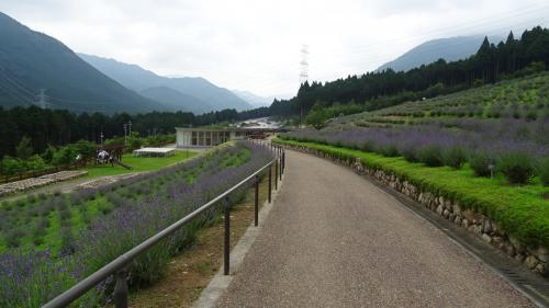 西日本最大のラベンダー園・・・ラベンダーパーク多可 上巻。
