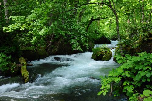 新緑の八甲田・十和田を旅する【2】~新緑の奥入瀬渓流と十和田湖遊覧~