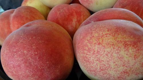 桃の買い出し(34) 桃の生産農家で桃の買い出し。