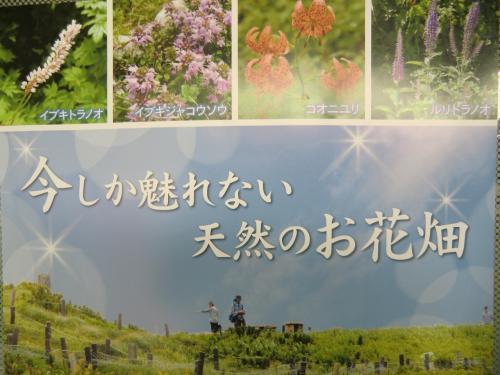今しか魅れない天然のお花畑(夏の伊吹山)