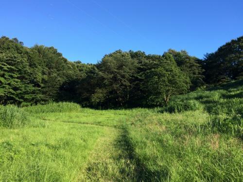 日帰りウォーキング、旧白洲武相荘と多摩丘陵