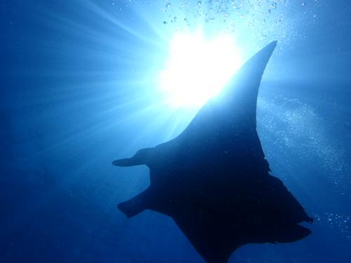 夏に熱い石垣島で体験ダイビング:シーバッド