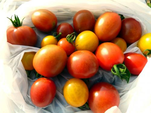 そば処 恋路亭の昼食 三島市佐野体験農園 インゲン・キュウリ・ピーマン・ズッキーニ・ミニトマトの収穫