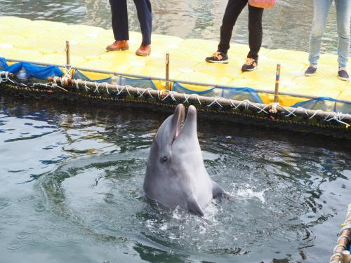 日間賀島でイルカと戯れてきましたぁ☆ヽ(*´∀`)ノ