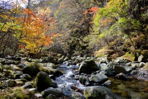 晩秋の清里高原、おすすめのハイキングコースは東沢渓谷。<br />落葉が進んだ深い沢には、木漏れ日が射し、一年で一番美しい季節です。