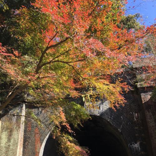 旧国鉄中央西線の高蔵寺~多治見間廃線跡に点在する「愛岐トンネル群」、毎年春秋2回「NPO法人 愛岐トンネル群保存再生委員会」により特別公開が実施されています。<br />2016年秋の特別公開は11月26日~12月4日となっていて、ぜひ一度出かけてみたいと機会を窺っていたところ、朝起きてみると昨日の風も収まり天気予報からも好天の予感が!<br />慌ただしくロードバイクの準備を整え、辿り着けなかったら引き返せば良いやと名古屋市名東区の自宅を出発!<br />会場内は平日にも関わらず多くのお年寄りで賑わっていましたが、素晴らしい紅葉と鉄道トンネル文化財を堪能することができました。<br />唯一残念だったのは、ヘタレロード初心者の分際も弁えず、欲をかいて帰路激坂区間(当人比)を含む定光寺公園経由などとしたおかげで息も絶え絶えの帰還からの筋肉痛発生と言う秋の特別大後悔になったことでしょうか…(。-_-。)<br /><br />走行距離 34.50km 走行時間 1:54:45 平均速度 18.02km/h 獲得標高 411m<br /><br /><br />NPO法人 愛岐トンネル群保存再生委員会公式サイト<br />http://aigi-tunnel.org