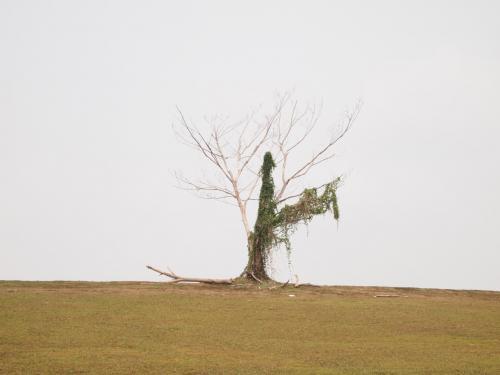 日本への一時帰国からブリスベンに戻る時のストップオーバー。<br />『トランジットdeシンガポール』シリーズ。<br /><br />郊外の街「Punggol」にインスタグラムで人気の一本木を見に行き、水辺をウォーキングしました。