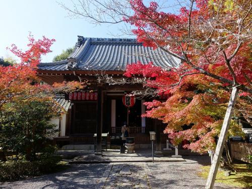 2016年秋、紅葉の京都の旅。<br /><br />盛りの少し前の赤山禅院へ。かえって、赤、黄、緑がおりなす錦模様を楽しむことができました。<br /><br />人出も少なめで、禅院らしい静かな雰囲気。境内には七福神の福禄寿や、縁結びの神様など、小さいけれど趣のあるお寺でした。<br /><br />赤山禅院は比叡山延暦寺の塔頭。京都御所の表鬼門を守護しているのだそう。鬼門除けの猿の像もありました。<br /><br />表紙写真は、赤山禅院の地蔵堂前の紅葉と寒桜。